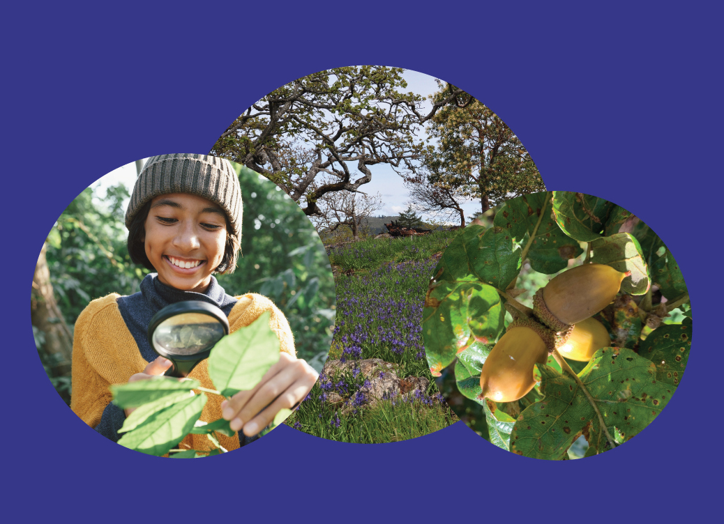 Montage of three photos includes (left) young person examining a leaf with a magnifying glass, (middle) a Garry Oak meadow with camas in bloom, and (right) a cluster of Garry Oak acorns.